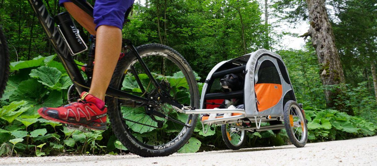 Test: Comfort Wagon, der beliebte